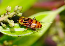 Mosca colorida Imagem de Stock Royalty Free