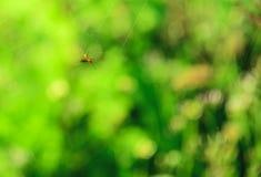 mosca con la ragnatela Fotografia Stock Libera da Diritti