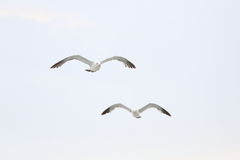 Mosca da gaivota imagem de stock royalty free