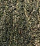 Mosca de abeja en la corteza del árbol en bosque Imagenes de archivo