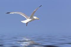 Mosca de la gaviota sobre el océano Imágenes de archivo libres de regalías