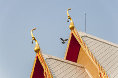 Mosca de la paloma cerca del tejado tailandés del templo con el cielo azul claro Imagen de archivo libre de regalías