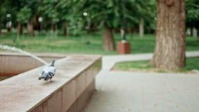 Mosca de la paloma lejos en la cámara lenta metrajes
