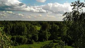 Mosca de la visión aérea sobre árboles metrajes
