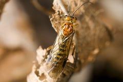 mosca de sierra de Web-giro fotografía de archivo