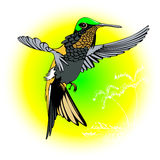 Mosca del colibrì Fotografie Stock