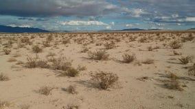 Mosca del desierto encima