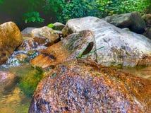 mosca del dragón que se sienta en la roca con la opinión hermosa del río Foto de archivo libre de regalías