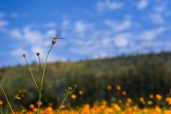 Mosca del drago sul fiore con la luce di giorno Fotografia Stock Libera da Diritti