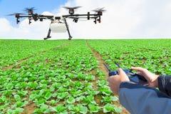 Mosca del fuco di agricoltura di controllo dell'agricoltore allo spruzzato a su lattuga Fotografie Stock Libere da Diritti