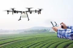 Mosca del fuco di agricoltura di controllo dell'agricoltore allo spruzzato a sul campo del tè Fotografia Stock Libera da Diritti