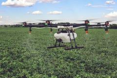Mosca del fuco di agricoltura a fertilizzante spruzzato sui campi verdi Immagine Stock Libera da Diritti