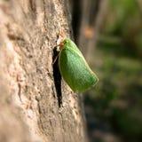 Mosca del insecto Imagenes de archivo