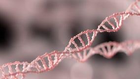 Mosca del materiale genetico del DNA da parte a parte illustrazione vettoriale
