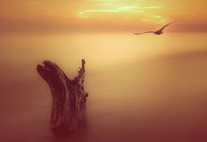 Mosca del pájaro del océano de la puesta del sol Imagen de archivo
