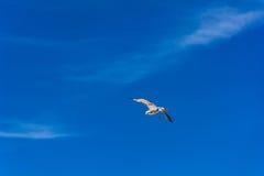 Mosca del pájaro en el cielo azul Imagen de archivo libre de regalías