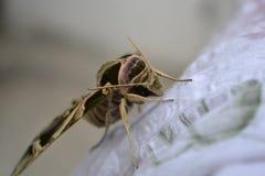 Mosca dell'insetto Fotografia Stock Libera da Diritti