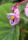 Mosca dell'insetto su un fiore Immagini Stock Libere da Diritti