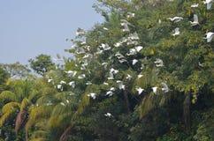 Mosca dell'uccello Immagini Stock Libere da Diritti