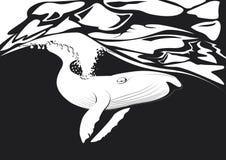 Mosca della balena nell'oceano Fotografia Stock