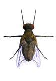 mosca della casa 3D royalty illustrazione gratis