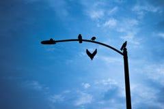 Mosca do pássaro fora da luz de rua fotografia de stock royalty free
