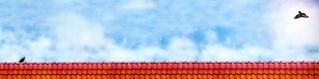mosca do pombo ao suporte do amante do pombo no clou do branco do telhado e do céu azul Foto de Stock