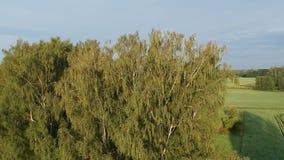 Mosca do zangão acima da elevação sobre a paisagem da terra das horas de verão na manhã vídeos de arquivo