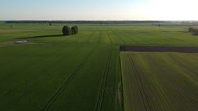Mosca do zangão acima dos campos verdes bonitos do prado e da colheita da mola filme