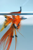 Mosca en agua foto de archivo