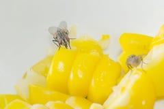 Mosca en el alimento Imagen de archivo libre de regalías