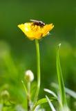 Mosca en la flor fotografía de archivo