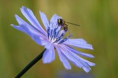 Mosca en la flor Imagen de archivo libre de regalías
