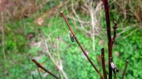 Mosca en las plantas secas fotos de archivo libres de regalías