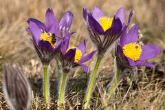 Mosca en las primeras flores de la primavera Imágenes de archivo libres de regalías