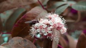 Mosca en una flor blanca Fotografía de archivo libre de regalías