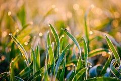 Mosca en una hierba del rocío de la mañana Fotografía de archivo libre de regalías