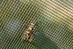 Mosca en una rejilla del mosquito Imagen de archivo