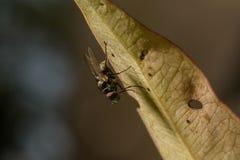 A mosca está sob a folha foto de stock royalty free