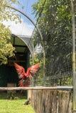 Mosca incantata del pappagallo del parco del giardino Immagine Stock