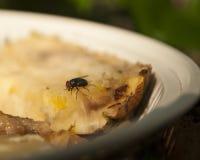 Mosca, insecto Imagen de archivo