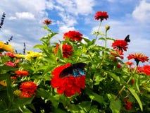 A mosca livra Fotografia de Stock Royalty Free