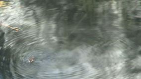 Mosca na água video estoque