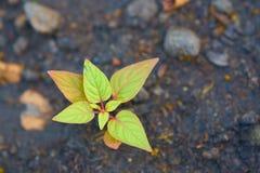 Mosca o insecto verde en la hoja del pequeño árbol en backgroun del suelo de la falta de definición foto de archivo