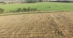 Mosca Oblast, Russia Giacimenti di grano sulla cima video d archivio