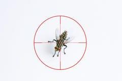 Resultado de imagem para mosca no alvo