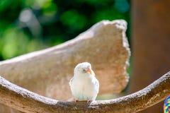 A mosca pequena do papagaio a ramificar para come o alimento do ser humano foto de stock royalty free