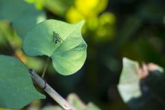 Mosca que descansa em uma folha verde Fotos de Stock