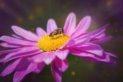 Mosca que se sienta en una flor Fotos de archivo libres de regalías