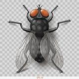 Mosca realistica dell'insetto nella mosca dell'insetto di vettore royalty illustrazione gratis